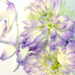 ただの日記ー花の写真